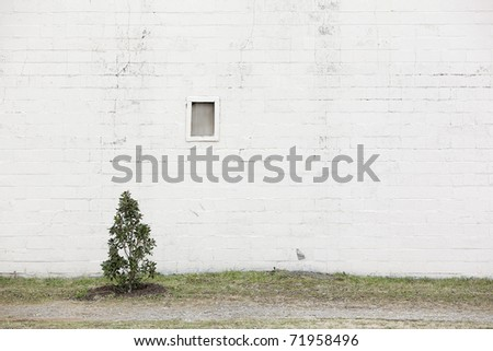 white wall with tree