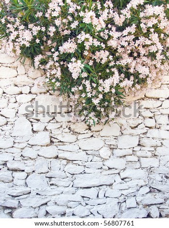 White-washed walls of rough stone with a beautiful white-pink flowers on top...