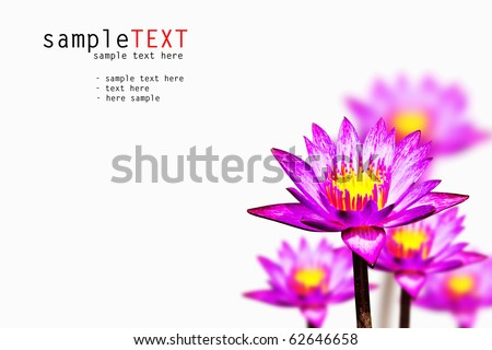 white water lilies isolated on white background