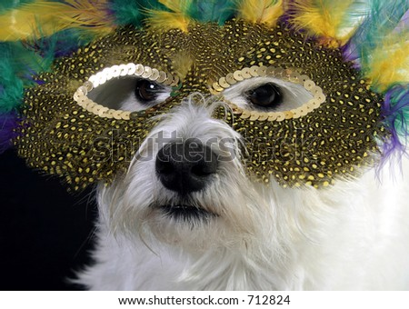 White West Highland Terrier in a mardi gras mask