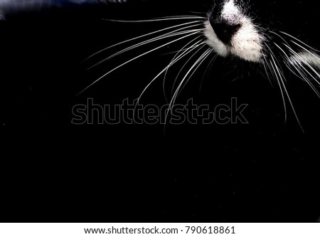 White whiskers on a black and white cat.