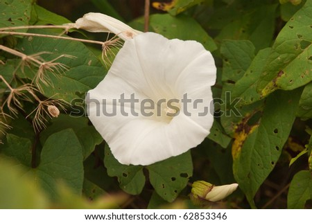 White wild flower in hedgerow by side of path
