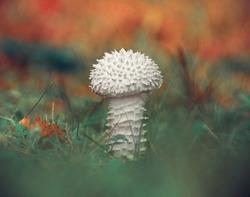 white wild mushroom vintage effect