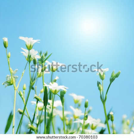 White wildflowers and morning sun.