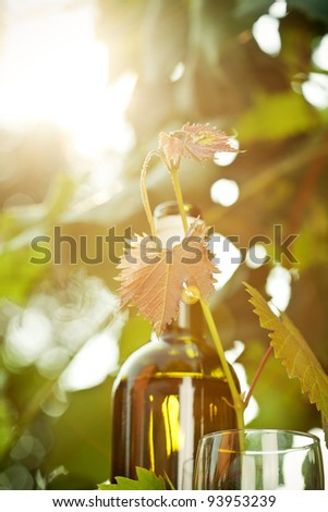 White wine bottle, young vine and glass against sunny spring background