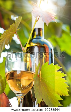 White wine bottle, young vine and glass against vineyard background