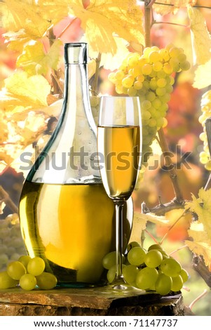 white wine on vineyard