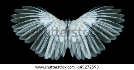 white wing on black blackground Foto stock ©
