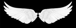 white wings isolated on a black