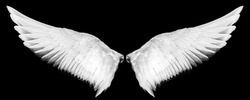 white wings isolated on a black background