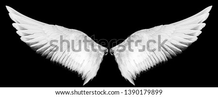 white wings isolated on a black background #1390179899