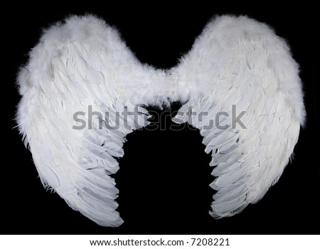 white wings on black