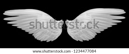 white wings on black background #1234477084
