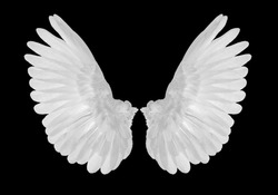 white wings on black blackground