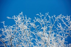 white winter branches on blue sky