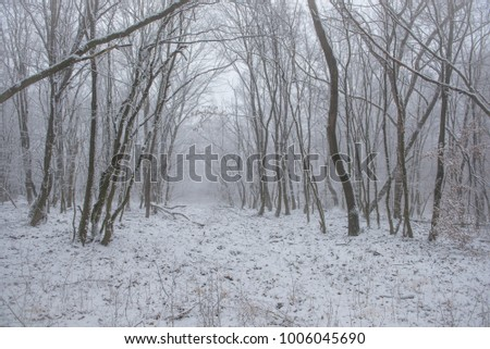 white winter forest #1006045690