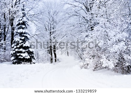 white winter landscape in Canada with trees covered in snow