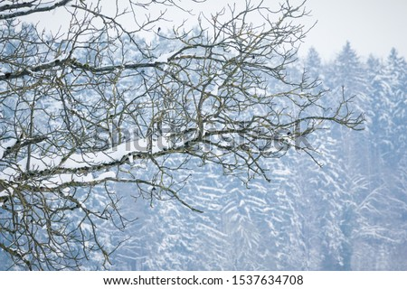 White winter wonderland tree in forest with snowy ice branches. Wonderful cold north weather scene at xmas time season. Icy frost and silence at beautiful country landscape. Part of cool series stock photo