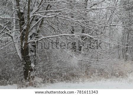 White Wintry Wonderland #781611343
