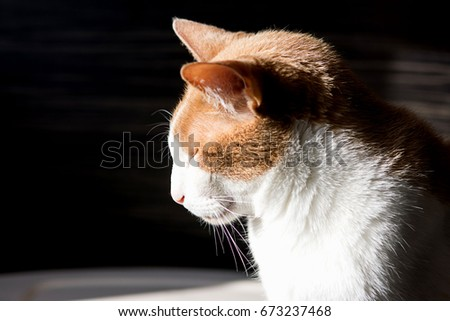 White with red cat. Real best profile cat photo