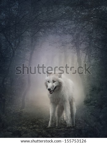Stock Photo White wolf in the night forest