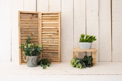White wood backdrop decoration. Green plants on white wood background.