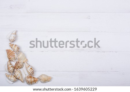 white wood background with conch shells and shells