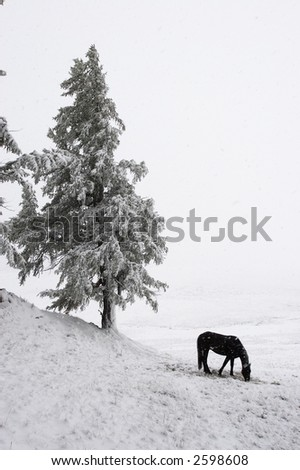 White wood, horse and snow. Altay. Russia.