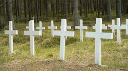 White wooden crosses in the forest grave yard. Unnamed graves of soliders who died in II WW. Pine forest around the old cemetary. White croesses lined up. Old crosses memorating sunk war ship
