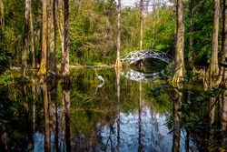White wooden footbridge over a blackwater swamp at Magnolia Plantation in the low country of Charleston, South Carolina.