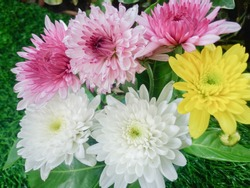white, yellow and pink double chrysanthemum baltica bouquet used for basing funeral tributes as background, traditional funeral flowers