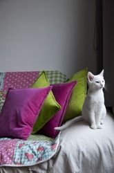 White, young cat on a sofa with green and purple pillows