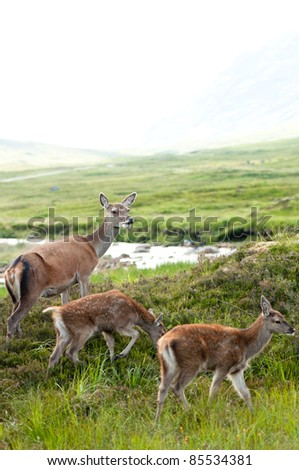 whitetail buck family with two cute babies