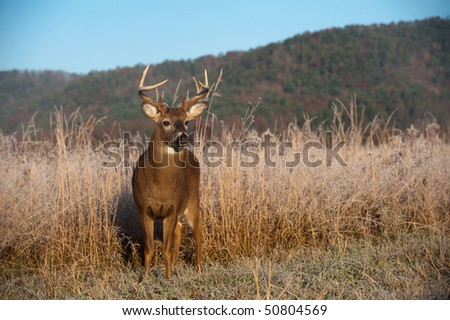 Whitetail buck standing in a meadow with fall colors and morning light on hillside.