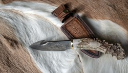 Whitetail deer hides make a nice backdrop for a deer antler damascus blade gut hook knife and leather sheath. Bokeh.
