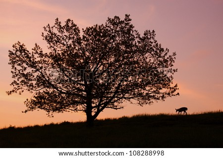 Whitetail Doe Deer with Oak Tree, silhouette with a colorful sky