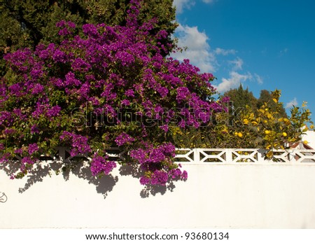 Whitewashed wall in front of a overflowing colorful Mediterranean garden