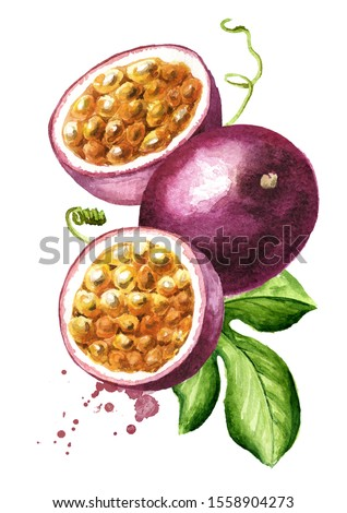 Whole and half passion fruits maracuja with green leaf, Watercolor hand drawn illustration isolated on white background