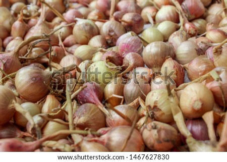 Whole fresh onions. Onions background. Ripe onions. Onions in market #1467627830