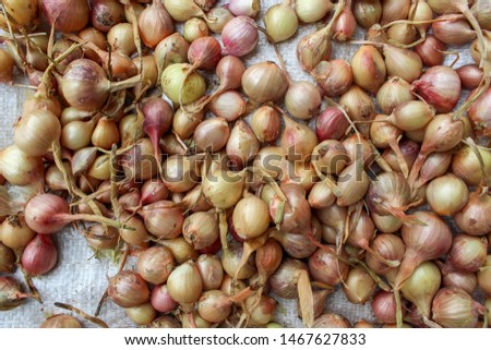 Whole fresh onions. Onions background. Ripe onions. Onions in market #1467627833