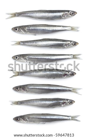 Whole fresh raw European anchovy on white background
