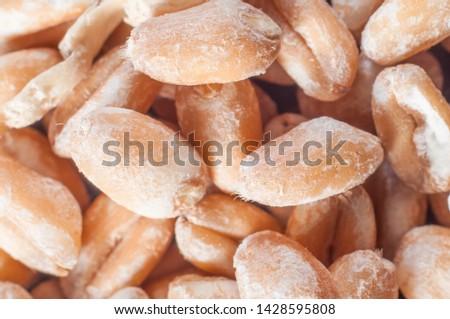 Whole grain wheat grains close-up. Macro shooting.