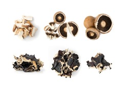 Whole portobello mushrooms, portabella or portobella isolated on white background. Dry black fungus, tree ear or wood ear mushrooms collection