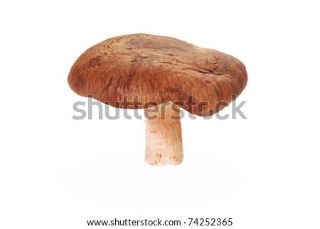Whole raw shiitake mushrooms isolated  white background.