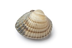 Whole single fresh cockle isolated on white background