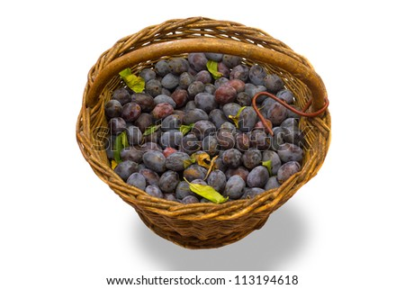 Wicker basket full of freshly collected purple plums.
