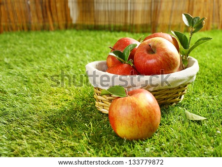 Wicker basket full of freshly picked apples lying on green grass in the garden with a single apple in the foreground on the lawn