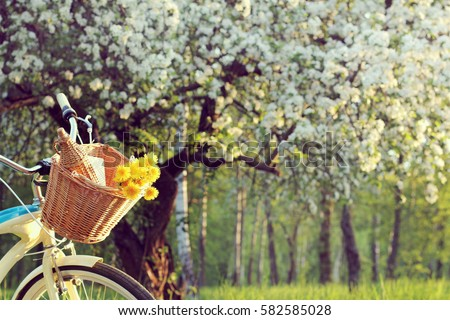 wicker basket with a bouquet of dandelions and retro bottle on the background of the spring landscape / bicycle picnic outdoors