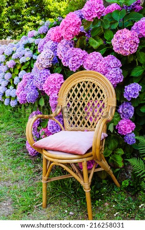 Wicker chair with faded velvet pillow and colorful hydrangea bushes in the garden. Brittany, France. Vacation at countryside background.