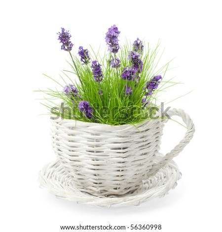 Wicker cup  and saucer planted with lavender amongst grass